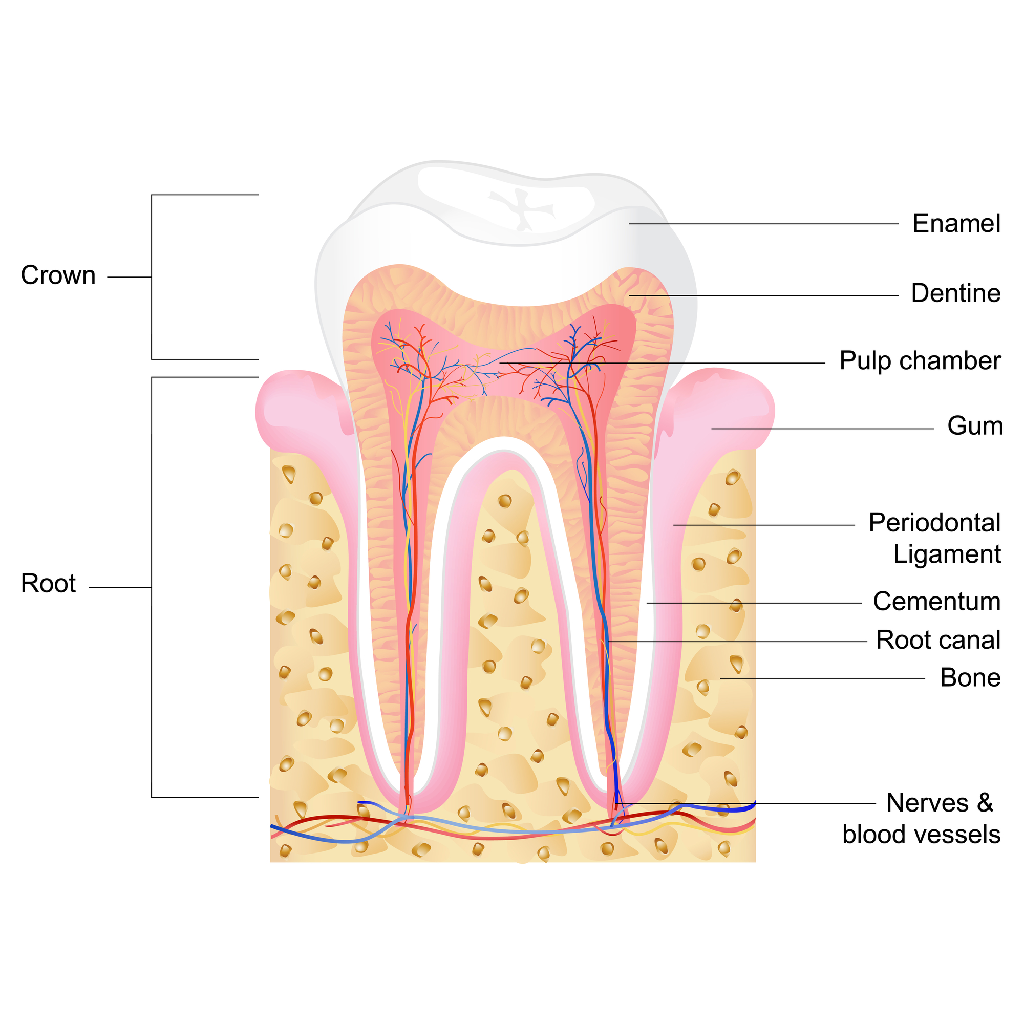 Who is the best oral surgeon North Palm Beach